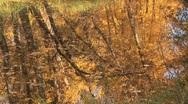 Autumn pond ripples Stock Footage