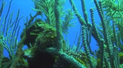 Soft coral against blue sea Stock Footage