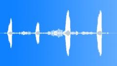 PineWarblerMCU64244 - sound effect