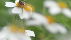 Bee 2 Stock Footage