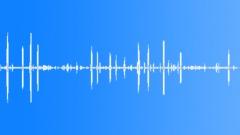 AntarcticFurSeal71137 - sound effect