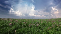 Field of spring flowers on a background cloudy sky Stock Footage