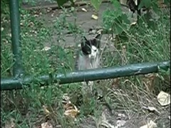 Funny Cat Jump Slow Motion 2 - stock footage