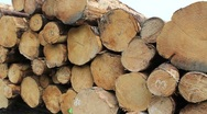 Stock Video Footage of Logs Stacked For Shipping