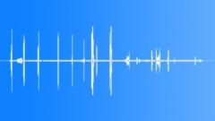 BrownCrestedFlyc62127 Sound Effect