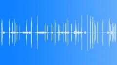 BrownCrestedFlyc59210 Sound Effect