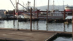 Sea lions scatter as boat comes into the dock Stock Footage