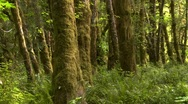 Stock Video Footage of Lush rain forest in Olympic National Park