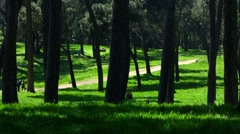 Rome Park Doria Pamphilj pine tree Stock Footage