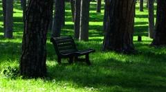 Rome Park Doria Pamphilj pine tree empty bench Stock Footage