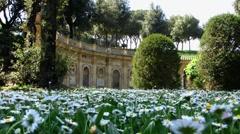 Rome Park Doria Pamphilj daisy flower in front Stock Footage
