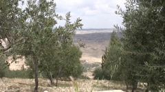 panorama: olive trees and Promised land - stock footage
