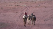 Stock Video Footage of man riding a camel, walks with four camels in desert