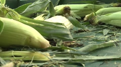Stock Video Footage of Farmer's Market Corn