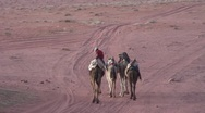 Stock Video Footage of 3 camels cu and long shot