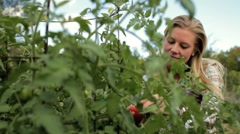 Woman picking a tomato from the garden Stock Footage