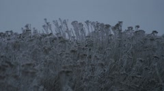 Snow and Ice on Plants 1432 Stock Footage