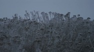 Stock Video Footage of Snow and Ice on Plants 1432