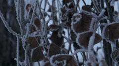 Snow and Ice on Branches 1425 Stock Footage
