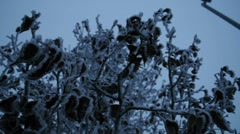 Snow and Ice on Branches 1413 Stock Footage