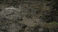 Rain Splashing in Mud Puddle 01850 Stock Footage