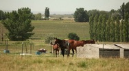 Country Horses 23.98p Stock Footage
