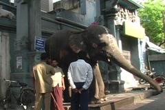 Sri Manakula Vinayagar temple elephant Stock Footage