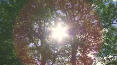 Sun through windy trees 04 Stock Footage