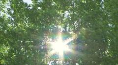 Stock Video Footage of Sun through windy trees 09