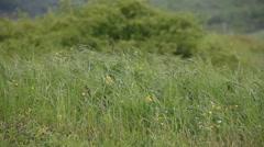 Wet meadow grass Stock Footage