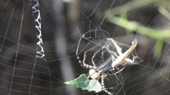 Spider 1286 Stock Footage