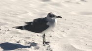 Stock Video Footage of Seagull on sand