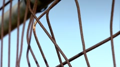Oxidized fence with creeping zoom. Stock Footage