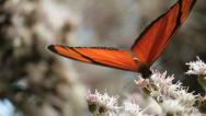 Colorful Butterfly 7 Stock Footage