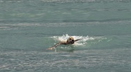 Stock Video Footage of Yellow Labrador Fetching Stick in Waves 2