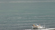 Stock Video Footage of Yellow Labrador Fetching Stick in Waves 1