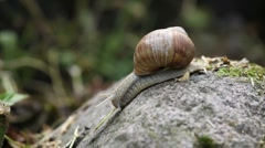 Close up of moving snail Stock Footage