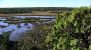 Stock Video Footage of A salt marsh near St. Augustine, Florida.