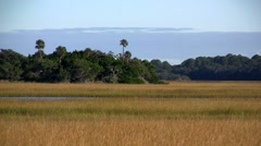 A salt marsh near St. Augustine, Florida. - stock footage