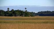 A salt marsh near St. Augustine, Florida. Stock Footage