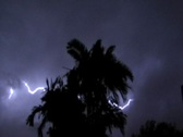 Stock Video Footage of Thunderstorm-Lightning-Palm Trees 4x3