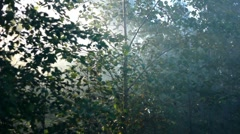 Forest in fog Stock Footage