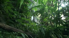 Tropical rain forest waterfall Stock Footage