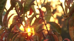 Plant closing sunset Stock Footage