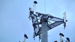 Buzzards on cell phone tower 09 Stock Footage