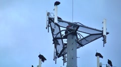 Buzzards on cell phone tower 10 Stock Footage