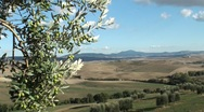 Stock Video Footage of olive tree in tuscan landscape