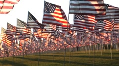 flags in  rows wind - stock footage