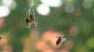 Stock Video Footage of Beautiful spider
