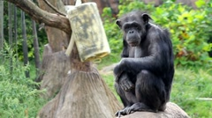 Monkey sitting and looking around. Stock Footage